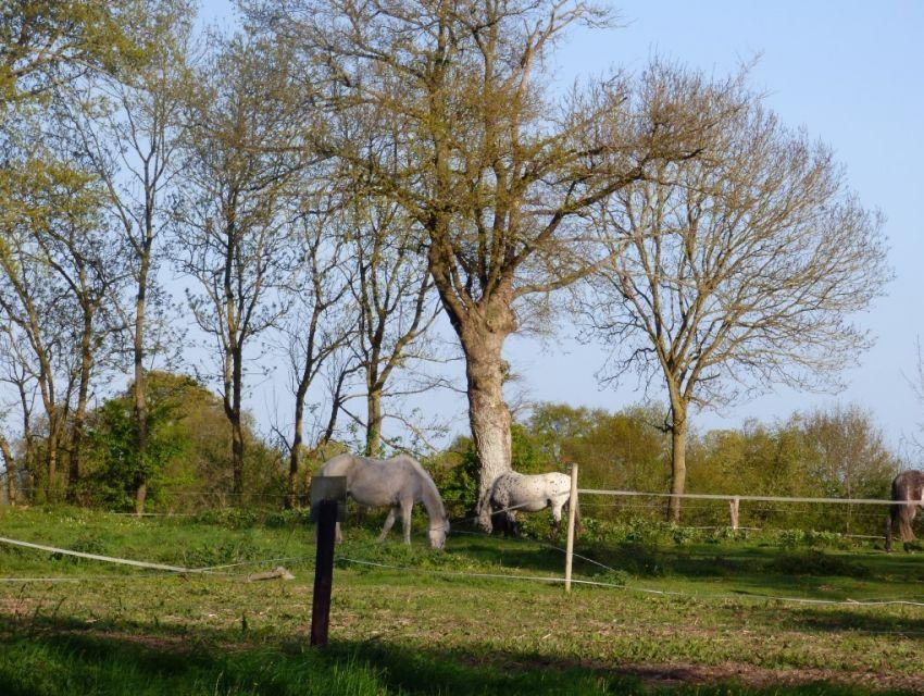 propriété agro-forestiere en Anjou aux confins de la Mayenne de la Sarthe et du 49