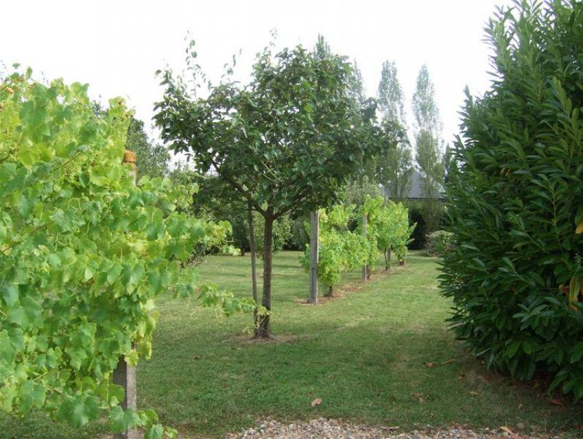 Verger (nombreux arbres fruitiers)